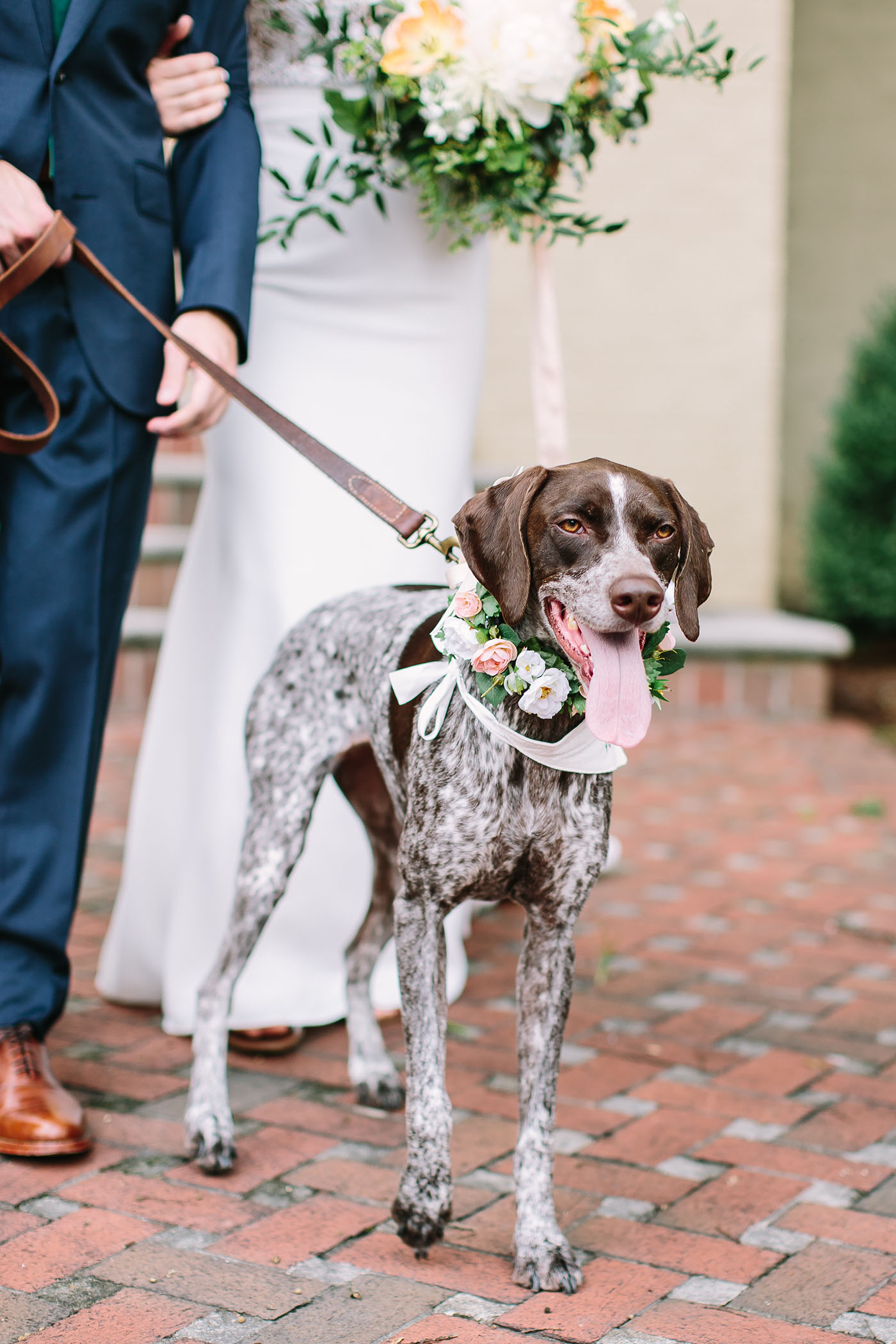 Wedding Dog, Hallie